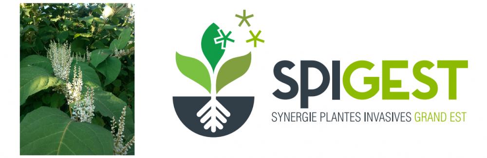 Pour une gestion intégrée des plantes invasives